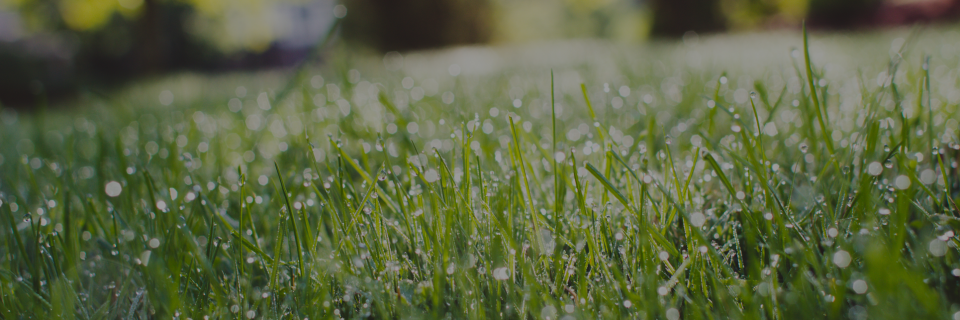 Your lawn care the way it should be